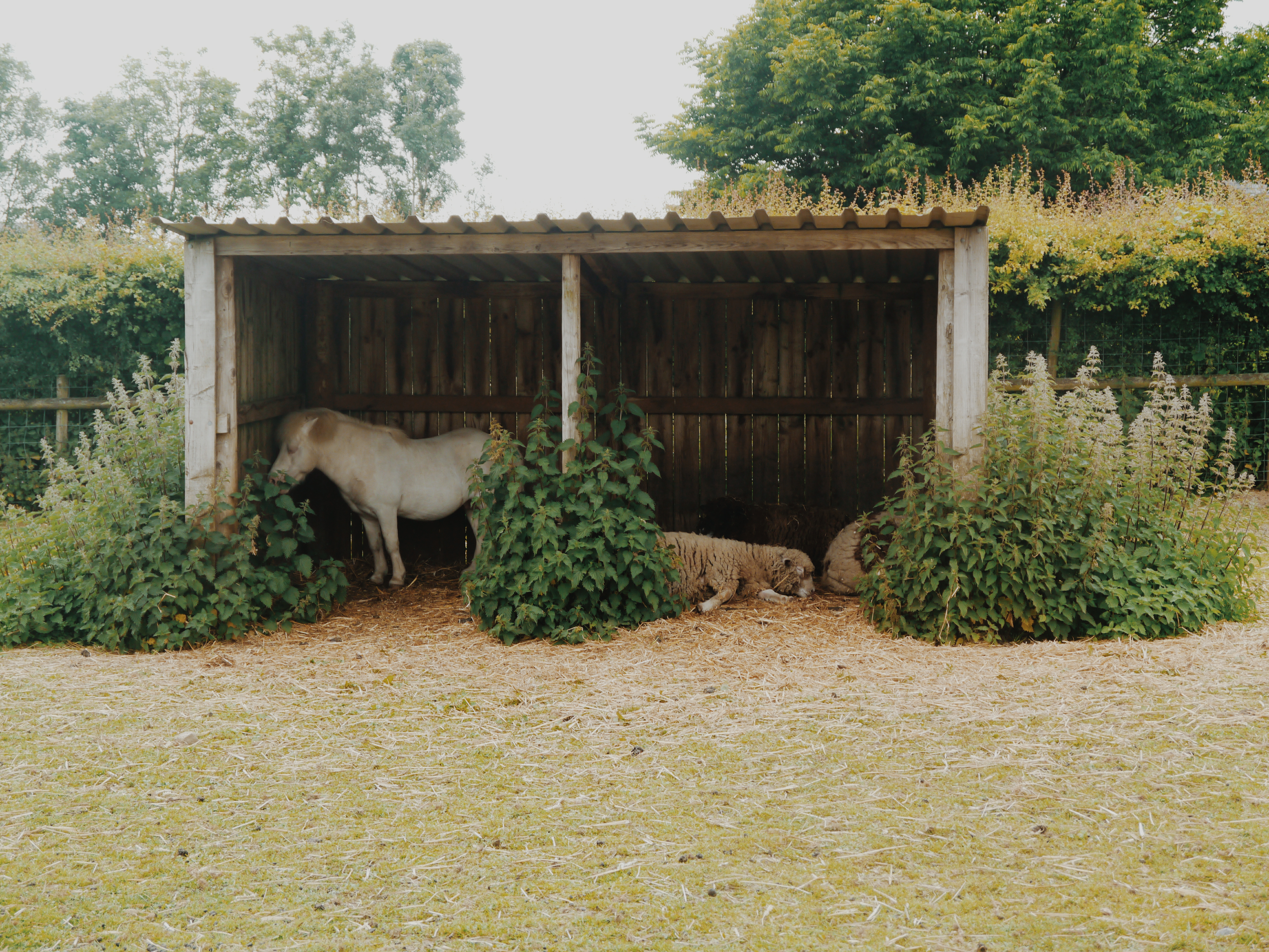 Folly-Farm-sheep-and-horse
