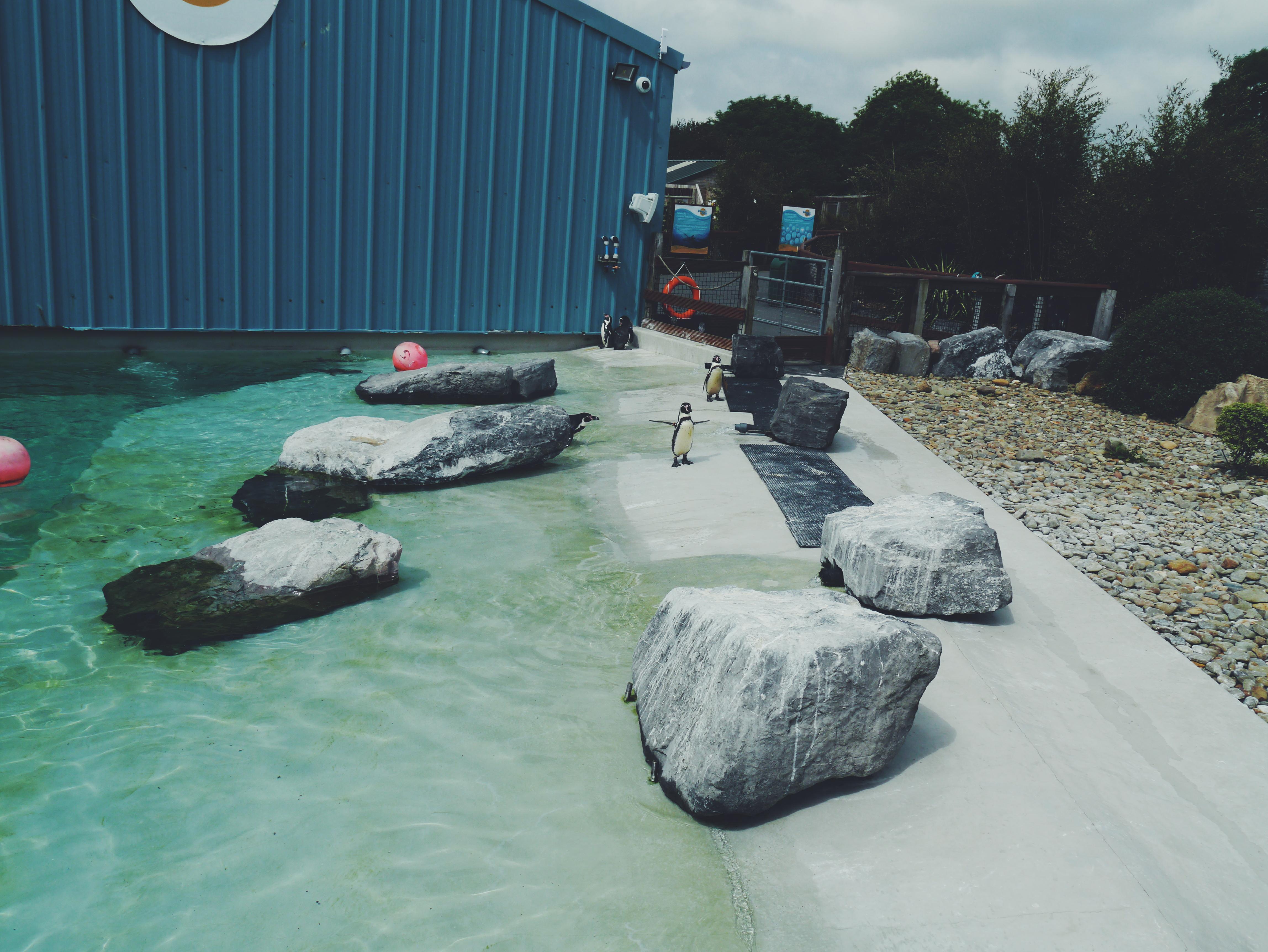 Folly-farm-penguins